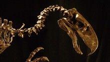 Őskori ragadozók: Óriási medve film