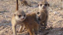 Furry Kats show