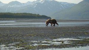 Könige Alaskas Foto