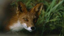 Kinn az orosz vadonban: Kamcsatka film