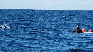 Vody plné žraloků fotografie