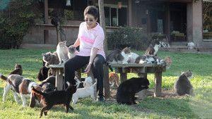 Salvatoarea felinelor imagine