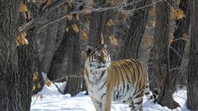 Wild Russia show