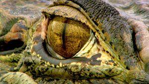 Wild Amazon photo
