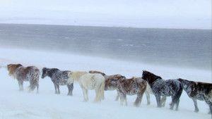 Scandinavische wilde dieren Foto