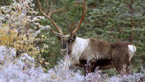 Nordisk dyreliv Billed