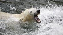 Tökéletes ragadozók: Jegesmedve film