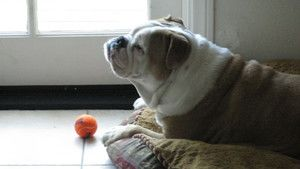 Bully Dogs photo