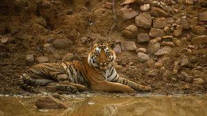 Exotisch India Foto