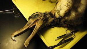 دایناسورهای عجیب عکس