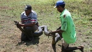 Anaconda: Queen Of The Serpents photo