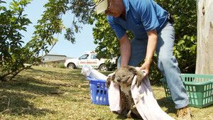 Koala Hospital photo