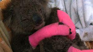 Koala Hospital photo
