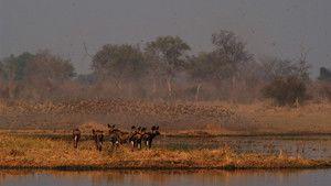 Harc a vadászmezőkért fotó