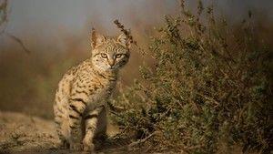 A dzsungeltől a sivatagig fotó