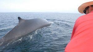 Kampf der Meeresungeheuer Foto