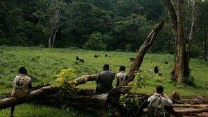 Az erdő és lakói fotó