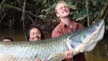 محارب الأسماك برنامج