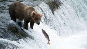 America The Wild Foto