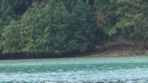 تحقيقات تحت سطح الماء صورة