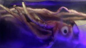 Jakten på kjempeblekkspruten Bilde