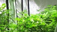 Le cannabis médical Voir la fiche programme