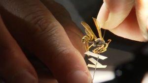 Beszélő rovarok fotó