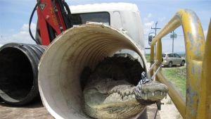 Costa Rica legveszélyesebb kígyói fotó