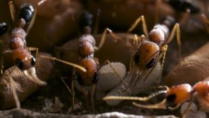 Le microcosme des fourmis photo