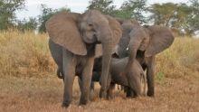 Les éléphants de Gorongosa Voir la fiche programme