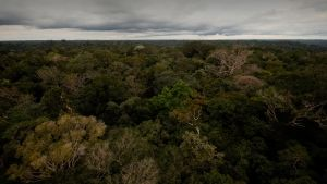 Brazil: The Amazon Basin photo