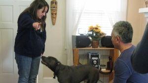Psy z New Jersey zdjęcie