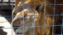 Hoarding Exotic Animals show