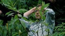 Orchideavadászok film