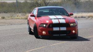 Mustang Billed