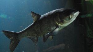 أسماك مخيفة صورة