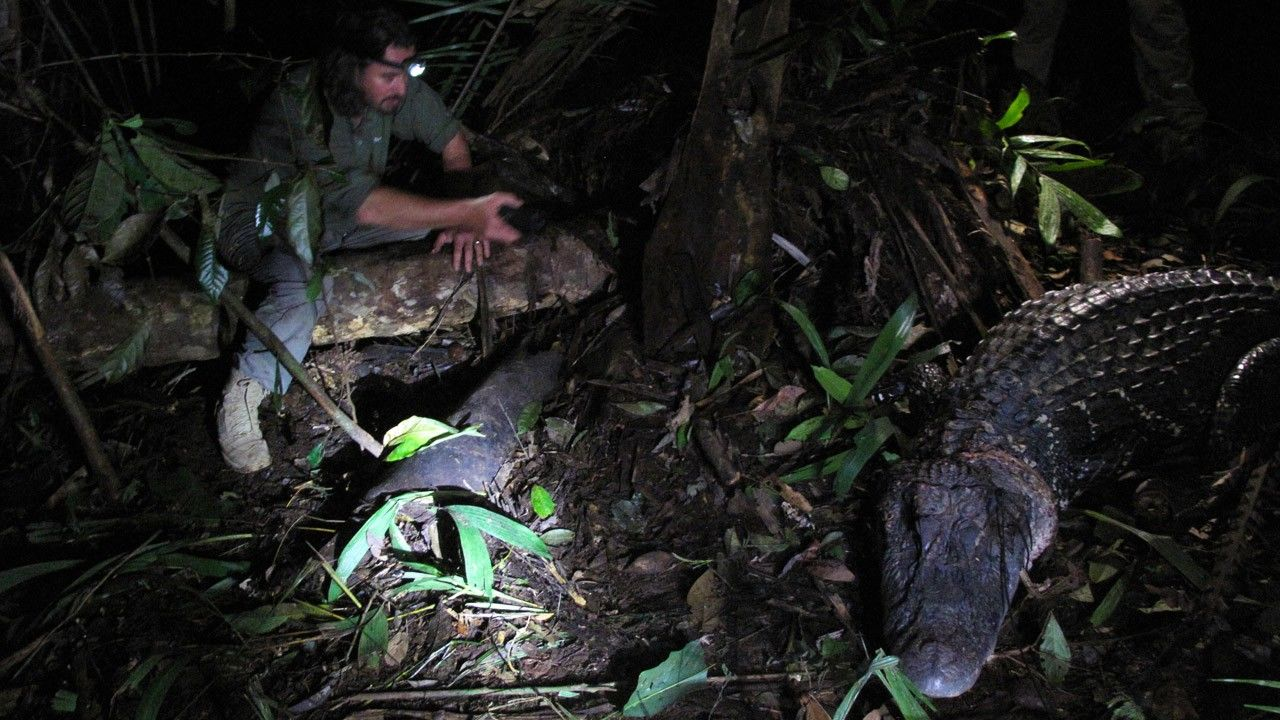 mysterious creatures photos   man v monster   national