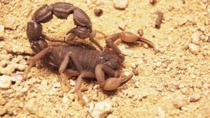 Africa's Deadliest photo