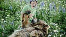 الدب الأشيب برنامج
