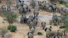 Top 5 Wildlife (week 7) Programma