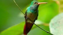 Top 5 Wildlife (week 9) Programma