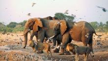 دشمنان دیرین_فیل و شیر برنامه