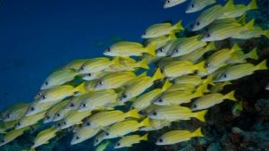 A Nagy-korallzátony fotó
