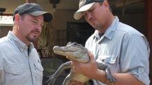 Python Hunters show