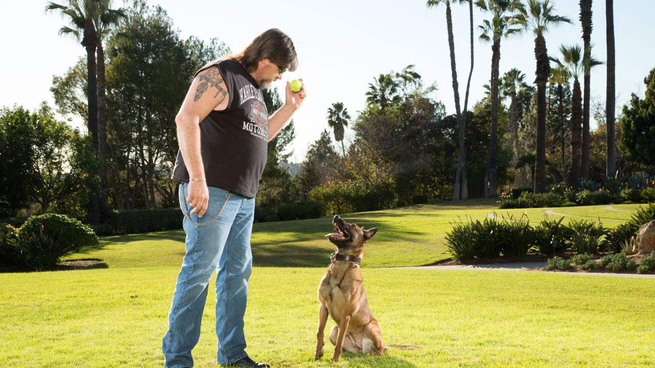 how to train a show dog