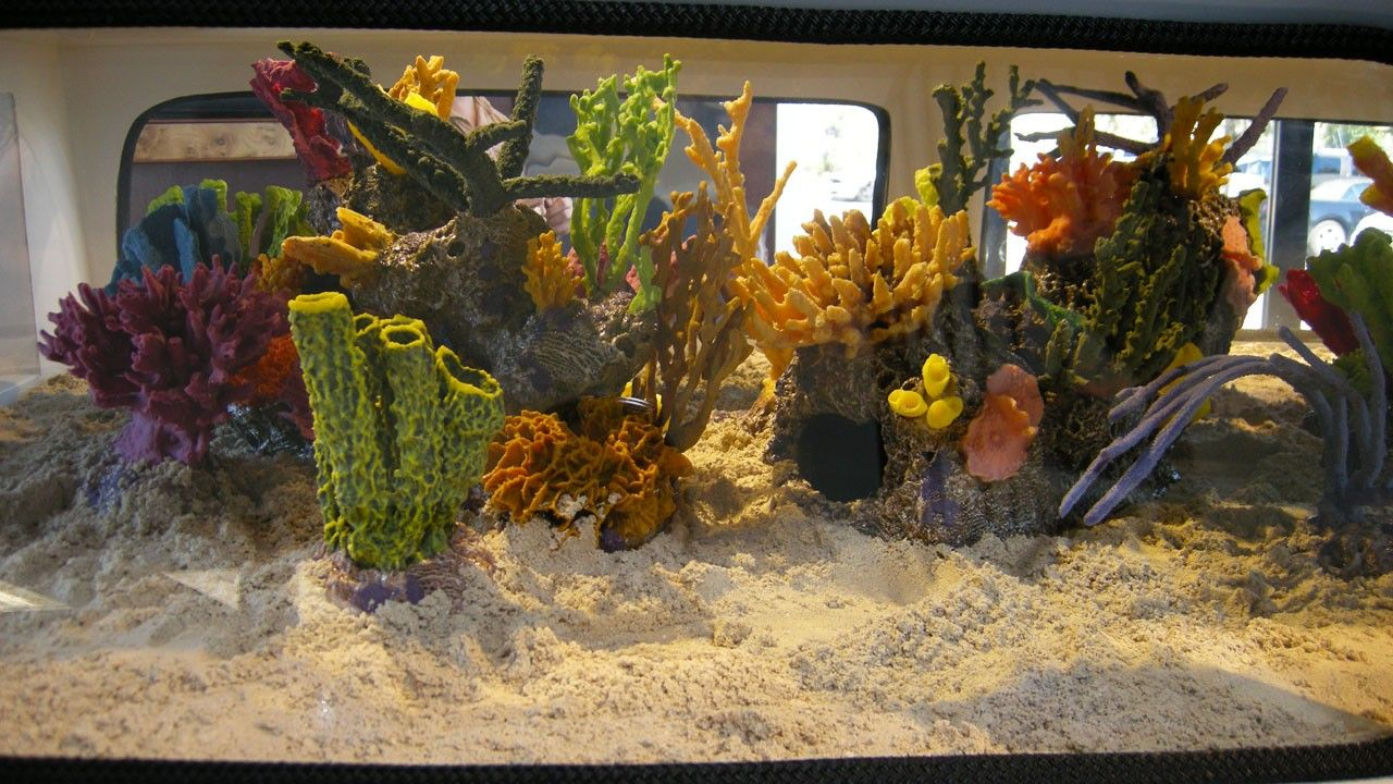 Volkswagen fish tank photos fish tank kings national for Fish tank kings
