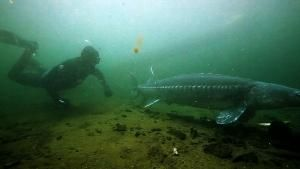 Bizarre Giant Fish photo