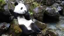 Жизнь панды программа
