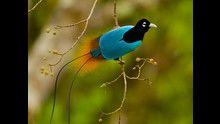 Le ali del paradiso con D. Attenborough: Foto programma