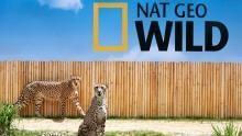 Cheetah Challenge show